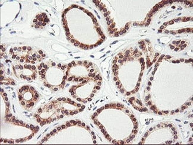 C20orf3 Mouse anti-Human, Clone: OTI3B3, liquid, TrueMAB  100 µL;