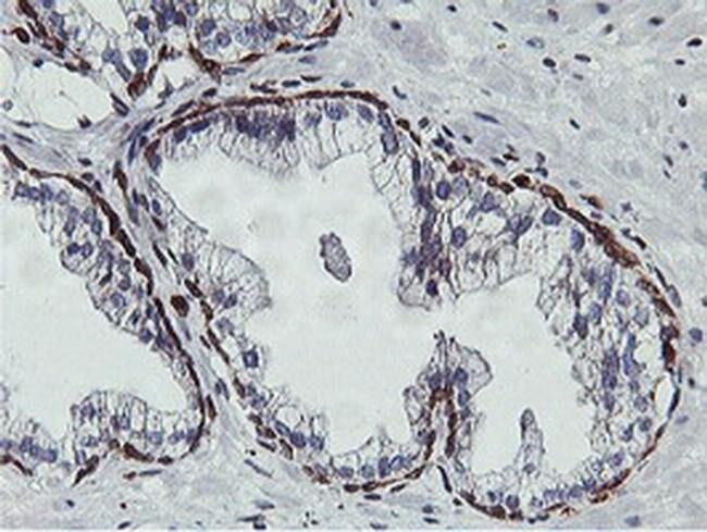 C20orf3 Mouse anti-Human, Clone: OTI1D7, liquid, TrueMAB  100 µL;