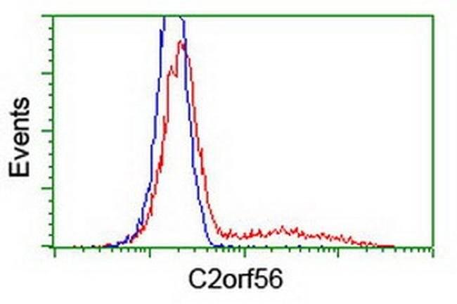 C2orf56 Mouse anti-Human, Clone: OTI6F10, liquid, TrueMAB  100 µL;