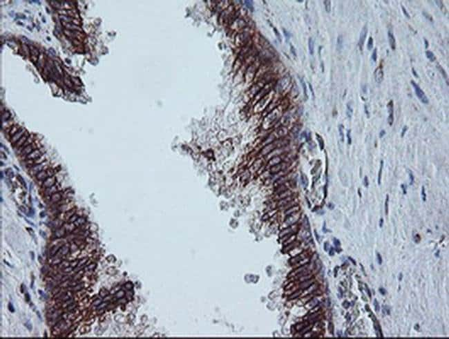 CAST Mouse anti-Human, Clone: OTI1E7, liquid, TrueMAB  100 µL; Unconjugated
