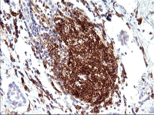 CD33 Mouse anti-Human, Clone: OTI2C1, liquid, TrueMAB  100 µL; Unconjugated