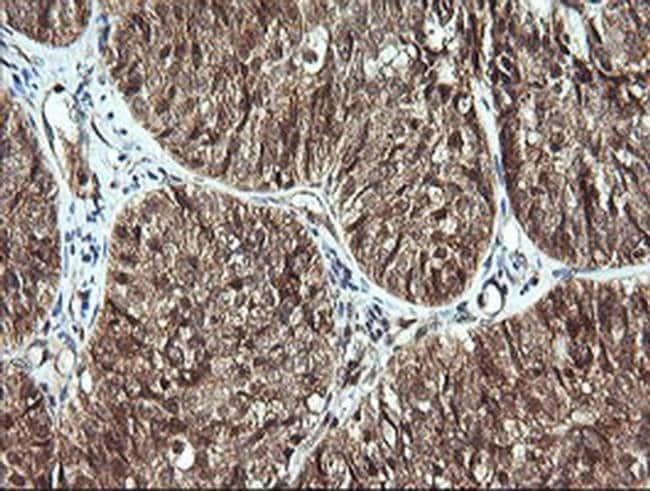 CDC123 Mouse anti-Human, Clone: OTI3E8, liquid, TrueMAB  100 µL; Unconjugated