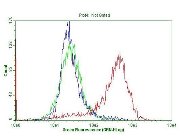 CDKN2A Mouse anti-Human, Clone: OTI11A6, lyophilized, TrueMAB  100 µg;