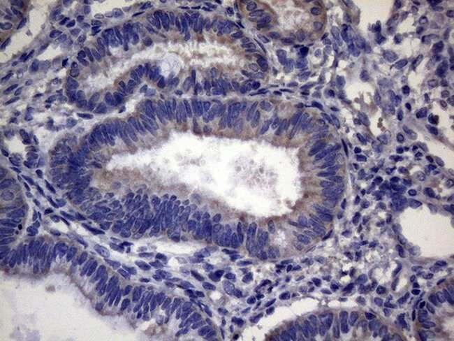 CEP63 Mouse anti-Human, Clone: OTI2F2, lyophilized, TrueMAB  100 µg;