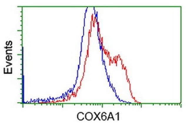 COX6A1 Mouse anti-Human, Clone: OTI5B6, liquid, TrueMAB  100 µL; Unconjugated