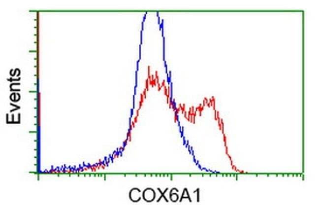 COX6A1 Mouse anti-Human, Clone: OTI3F1, liquid, TrueMAB  100 µL; Unconjugated