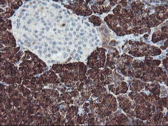 CPA1 (Carboxypeptidase A1) Mouse anti-Human, Clone: OTI2E3, liquid, TrueMAB