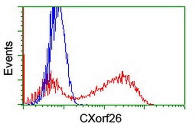 CXorf26 Mouse anti-Human, Clone: OTI4F11, liquid, TrueMAB  100 µL;