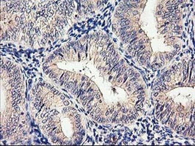 CYP2J2 Mouse anti-Human, Clone: OTI5C5, liquid, TrueMAB  100 µL; Unconjugated