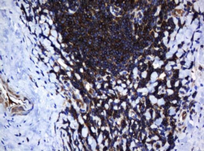 DEF6 Mouse anti-Human, Clone: OTI1D1, liquid, TrueMAB  100 µL; Unconjugated