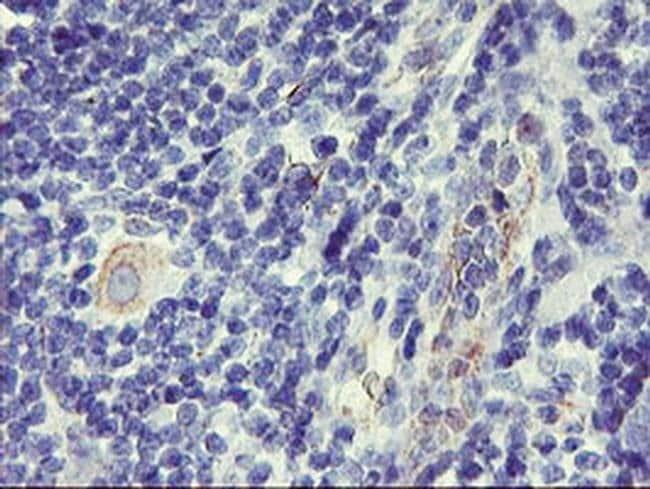 DPP9 Mouse anti-Canine, Human, Clone: OTI4F1, liquid, TrueMAB  100 µL;