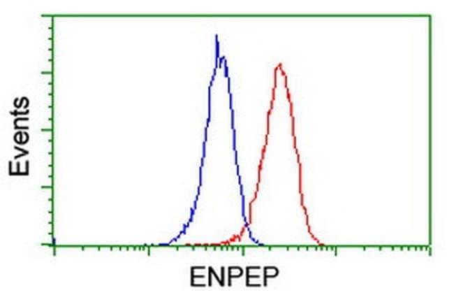 ENPEP Mouse anti-Human, Rat, Clone: OTI4G8, liquid, TrueMAB  100 µL;