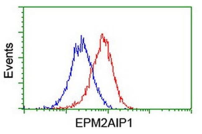 EPM2AIP1 Mouse anti-Human, Clone: OTI2A2, liquid, TrueMAB  100 µL;