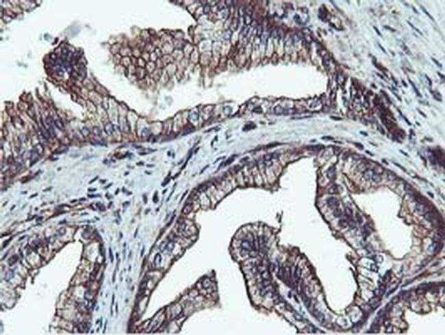 EPN2 Mouse anti-Human, Clone: OTI1H3, liquid, TrueMAB  100 µL; Unconjugated