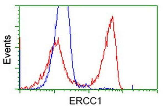 ERCC1 Mouse anti-Human, Clone: OTI1A8, liquid, TrueMAB  100 µL; Unconjugated