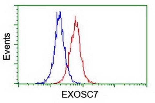 EXOSC7 Mouse anti-Canine, Human, Mouse, Rat, Clone: OTI1G8, liquid, TrueMAB