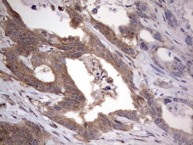 FAF1 Mouse anti-Human, Clone: OTI10D1, lyophilized, TrueMAB  100 µg;