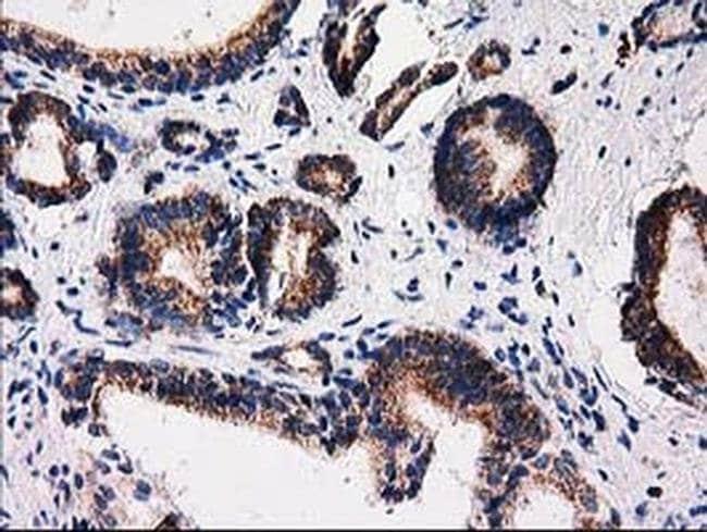 FAM127C Mouse anti-Human, Clone: OTI1A6, liquid, TrueMAB  100 µL;