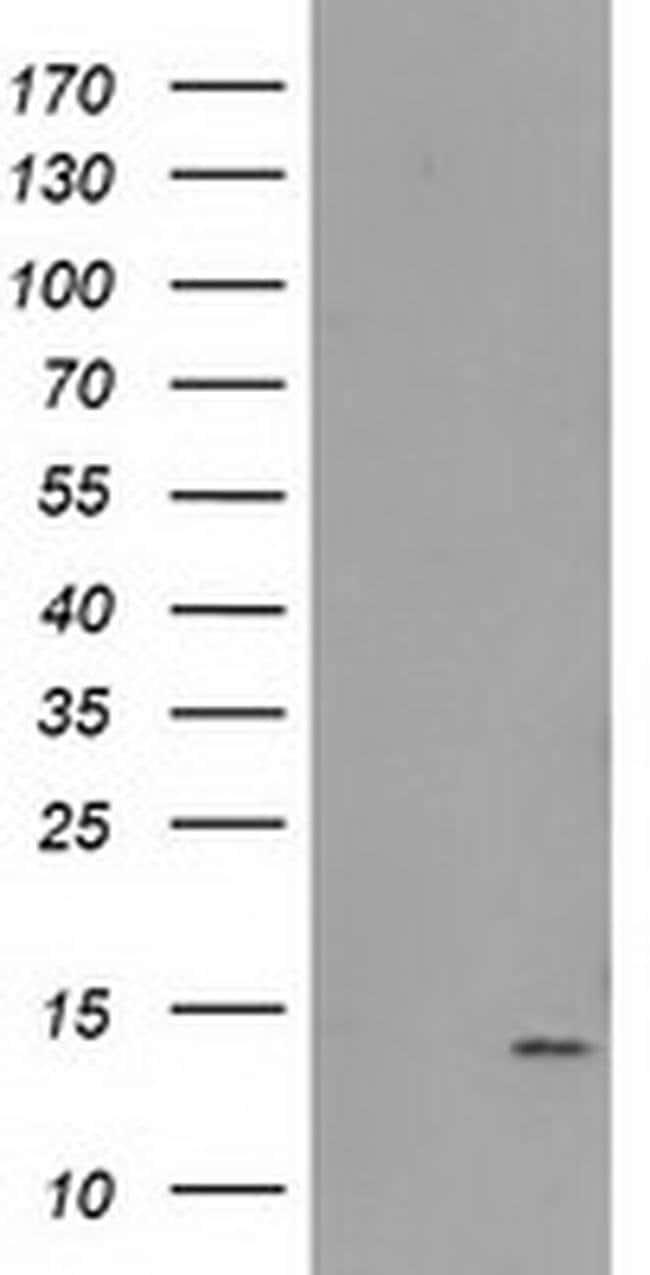 FAm127C Mouse anti-Human, Clone: OTI2D4, liquid, TrueMAB  100 µL;