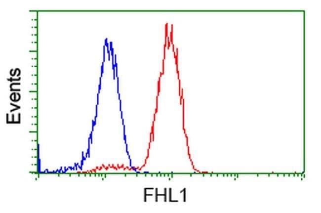 FHL1 Mouse anti-Human, Clone: OTI1D6, liquid, TrueMAB  100 µL; Unconjugated
