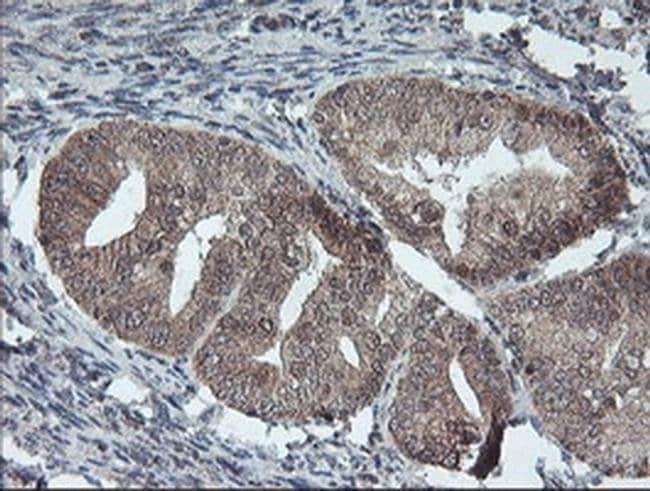 FMR1 Mouse anti-Canine, Human, Mouse, Rat, Clone: OTI2C3, liquid, TrueMAB