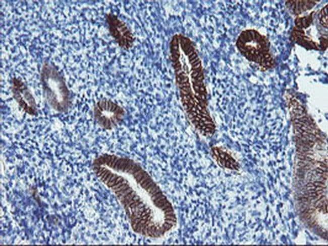 FXYD3 Mouse anti-Human, Clone: OTI1F12, liquid, TrueMAB  100 µL; Unconjugated