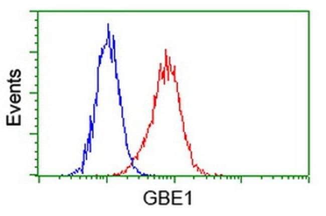 GBE1 Mouse anti-Human, Clone: OTI4A1, liquid, TrueMAB  100 µL; Unconjugated