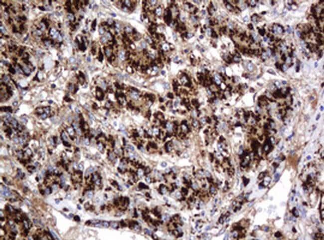 GLB1 Mouse anti-Canine, Human, Clone: OTI1C9, liquid, TrueMAB  100 µL;