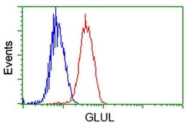 GLUL Mouse anti-Human, Clone: OTI1F4, liquid, TrueMAB  100 µL; Unconjugated