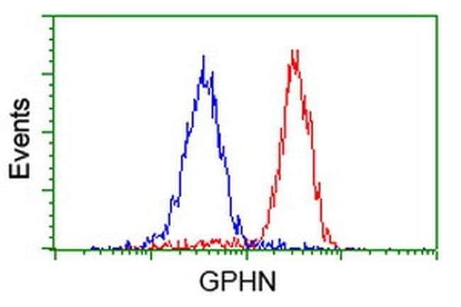 GPHN Mouse anti-Human, Clone: OTI3C6, liquid, TrueMAB  100 µL; Unconjugated
