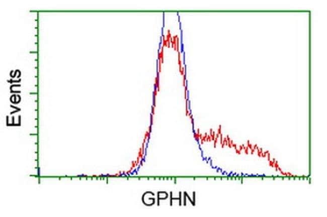 GPHN Mouse anti-Human, Clone: OTI5C9, liquid, TrueMAB  100 µL; Unconjugated