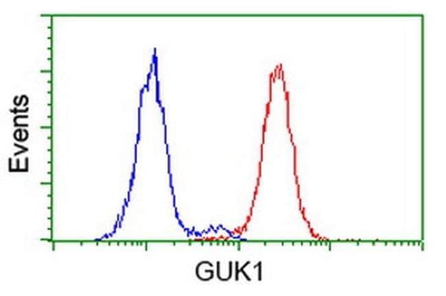 GUK1 Mouse anti-Human, Clone: OTI4A8, liquid, TrueMAB  100 µL; Unconjugated