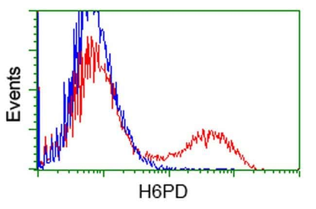 H6PD Mouse anti-Human, Clone: OTI1H6, liquid, TrueMAB  100 µL; Unconjugated