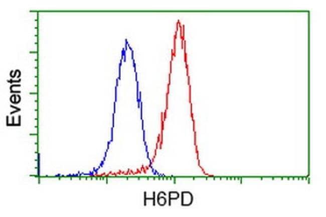 H6PD Mouse anti-Human, Clone: OTI3H5, liquid, TrueMAB  100 µL; Unconjugated