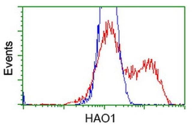 HAO1 Mouse anti-Human, Clone: OTI5A1, liquid, TrueMAB  100 µL; Unconjugated
