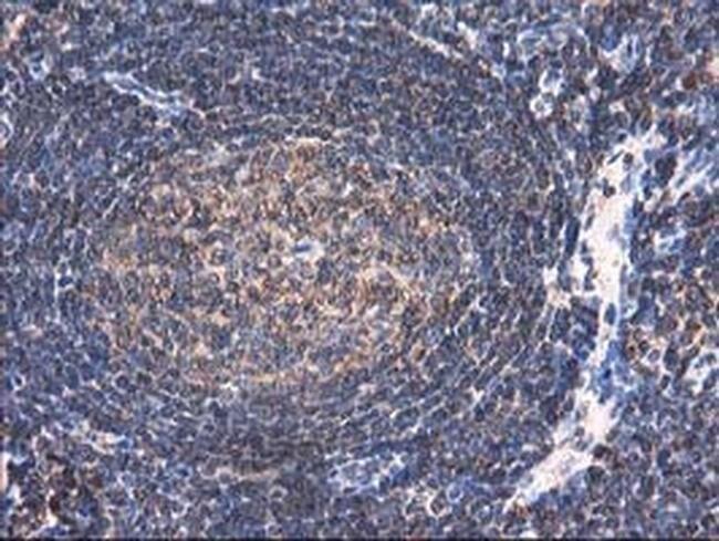 HARS2 Mouse anti-Human, Clone: OTI3F1, liquid, TrueMAB  100 µL; Unconjugated