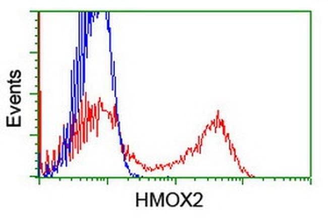 HMOX2 Mouse anti-Human, Clone: OTI1H10, liquid, TrueMAB  100 µL; Unconjugated