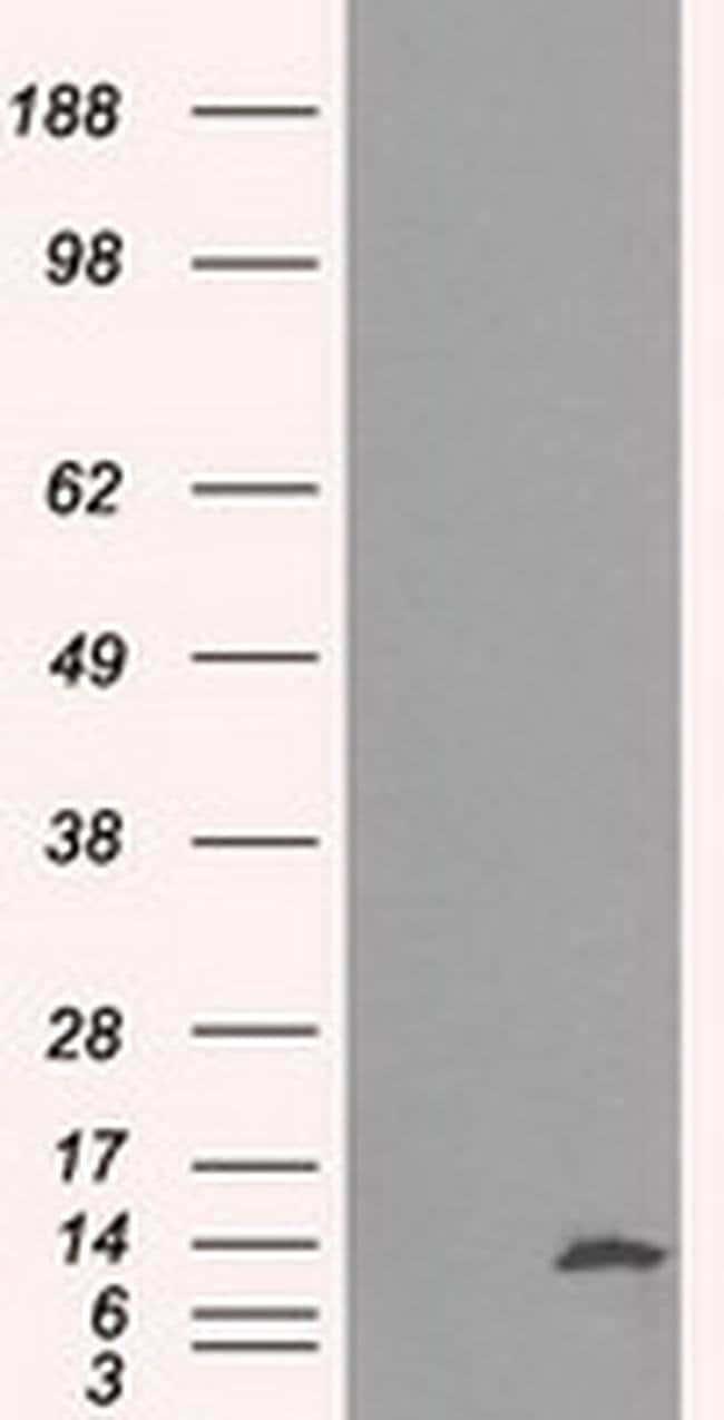 ID3 Mouse anti-Human, Clone: OTI4D1, liquid, TrueMAB  100 µL; Unconjugated