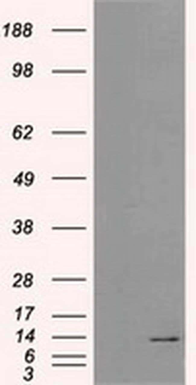 ID3 Mouse anti-Human, Clone: OTI10D3, liquid, TrueMAB  30 µL; Unconjugated