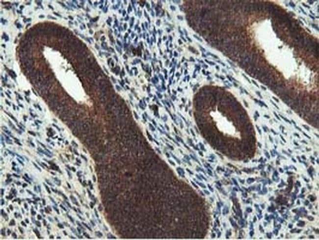IDS Mouse anti-Human, Clone: OTI3B10, liquid, TrueMAB  100 µL; Unconjugated