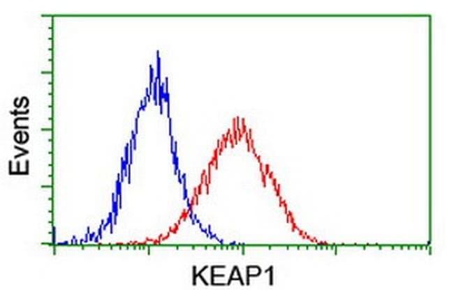 KEAP1 Mouse anti-Human, Mouse, Clone: OTI1B4, liquid, TrueMAB  100 µL;