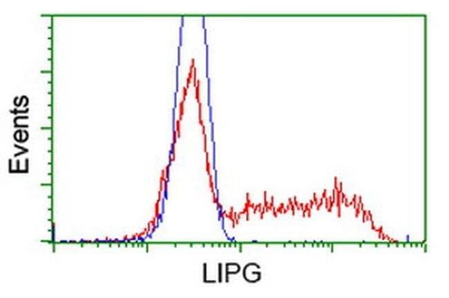 LIPG Mouse anti-Human, Clone: OTI4C1, liquid, TrueMAB  100 µL; Unconjugated