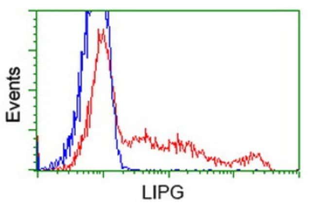 LIPG Mouse anti-Human, Clone: OTI2A5, liquid, TrueMAB  100 µL; Unconjugated