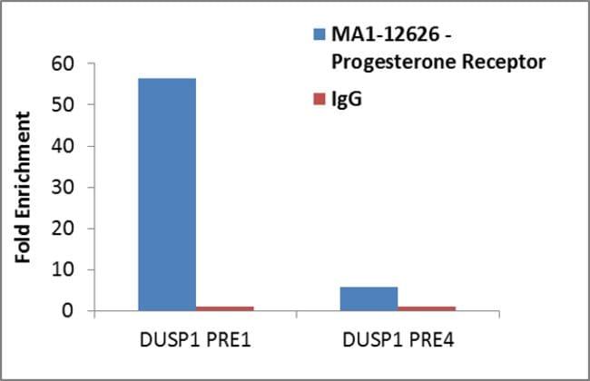 Progesterone Receptor Mouse anti-Equine, Human, Porcine, Invitrogen 100
