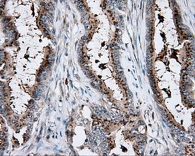 KCTD5 Mouse anti-Human, Clone: OTI3C8, Invitrogen 100 µL; Unconjugated