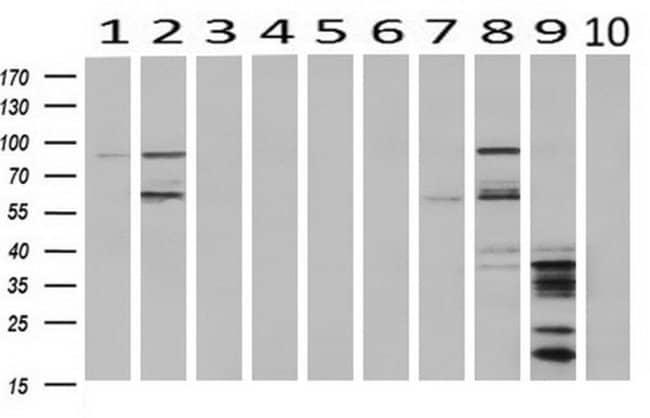 HID1 Mouse anti-Canine, Human, Non-human primate, Rat, Clone: OTI2F4, Invitrogen