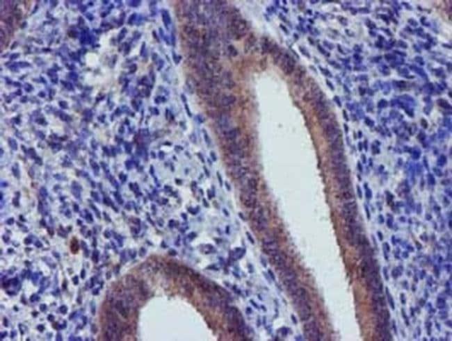 CHCHD5 Mouse anti-Human, Clone: OTI4F3, Invitrogen 100 µL; Unconjugated