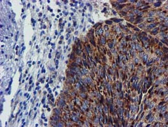 CHCHD5 Mouse anti-Human, Clone: OTI3H3, Invitrogen 100 µL; Unconjugated