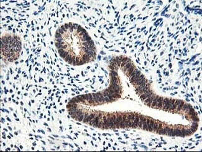 PRMT2 Mouse anti-Human, Clone: OTI3A3, Invitrogen 100 µL; Unconjugated