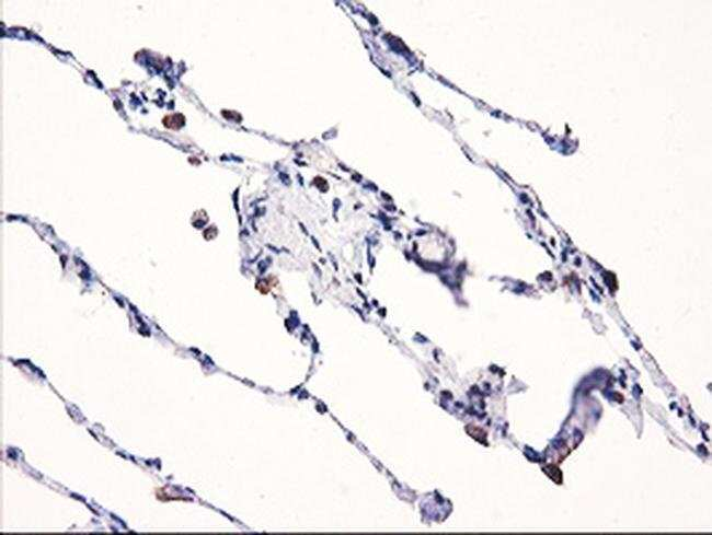 NLN Mouse anti-Human, Clone: OTI3A12, Invitrogen 100 µL; Unconjugated